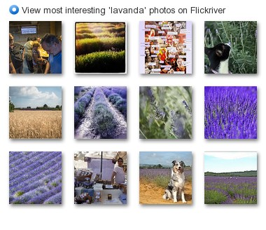 View most interesting 'lavanda' photos on Flickriver