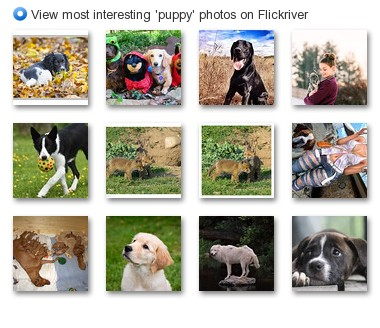 View most interesting 'puppy' photos on Flickriver