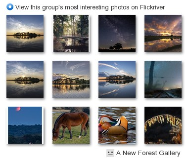A New Forest Gallery - View this group's most interesting photos on Flickriver