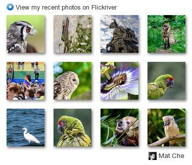 Mc Interactivity - View my recent photos on Flickriver