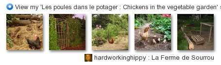 hardworkinghippy - View my 'Chickens in the vegetable garden - Des poules dans le potager' set on Flickriver