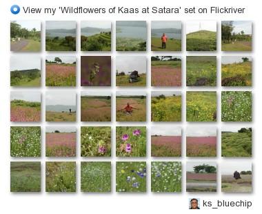 ks_bluechip - View my 'Wildflowers of Kaas at Satara' set on Flickriver